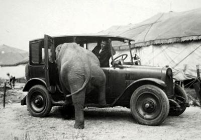 elephant into car.jpg