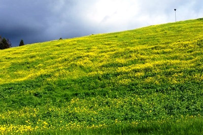 Hill of green 400 x 266.jpg