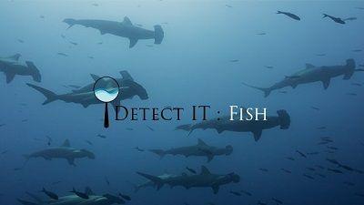 DetectIT_Fish.jpg