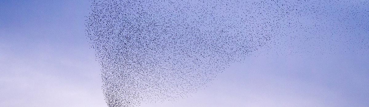 buzz-around-swarm-d.png