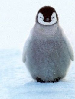 baby penguin in snow iphone.jpg