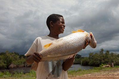 Photo courtesy of World Wildlife Fund