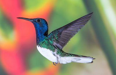 hummingbird-for blog.jpg