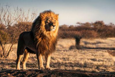 3PAR_king of the storage jungle_blog.jpg