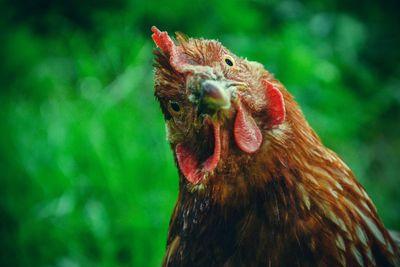 Chicken or the egg.jpg