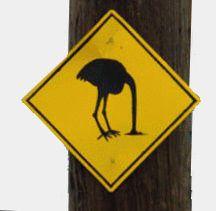Ostrich head in sand sign.jpg