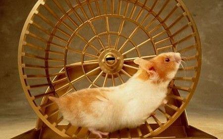 Hamster wheel -realistic.jpg