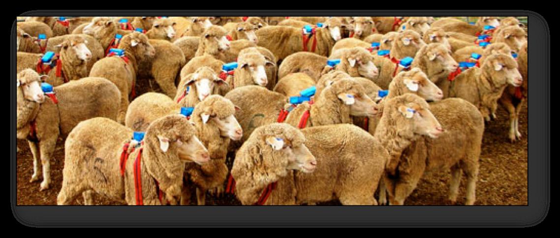 Sheep_GPS_Copyright_A.J.png