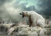 SDS_bear_ATSB_shutterstock_121554535_01Oct.jpg
