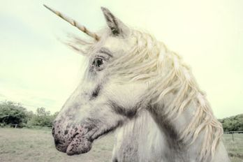 unicorn_shutterstock_212811721_18Feb_blog_sized.jpg