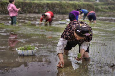 bigstock-Agricultural-Work-Asian-Women-102860147.jpg