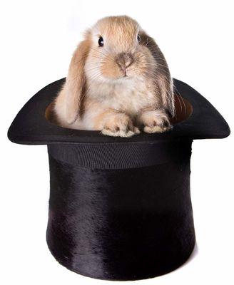 rabbit-hat1.jpg