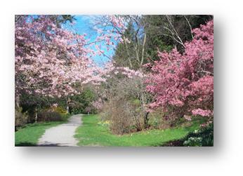 Azalea Way  - Seattle Arboretum