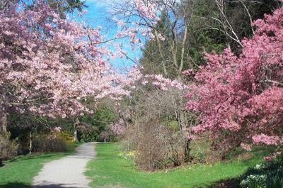 Seattle Arboretum.jpg